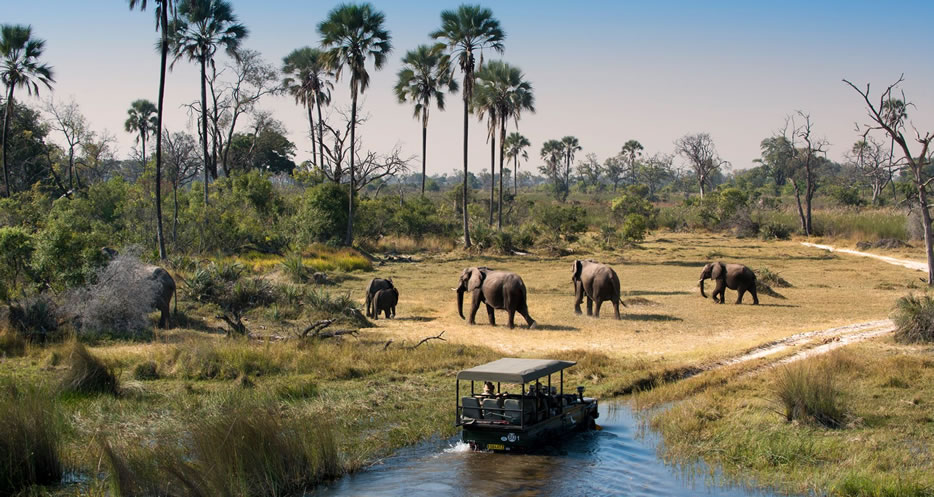 okavango-delta-game-drive-botswana