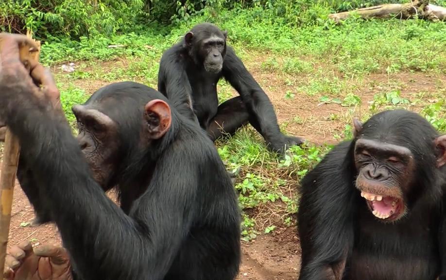 9 Day Self Drive Tour Uganda - Pure Primates | Car Rental Uganda